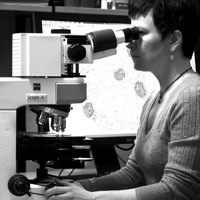 Implema Atlas Antibodies Partners Implema